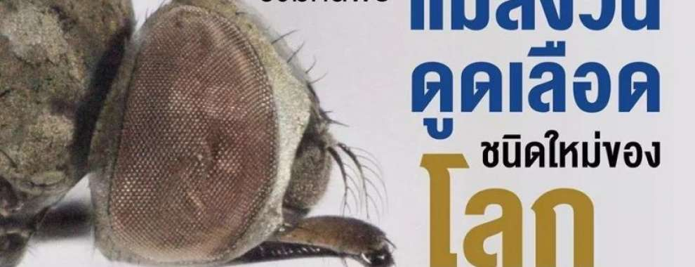 """มอมหิดลพบ """"แมลงวันดูดเลือด"""" ใหม่ของโลก"""